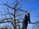 Der Februar ist die beste Zeit, um den Obstbäumen einen Schnitt zu verpassen, damit die Ernte ertragreich ausfällt. (Foto)