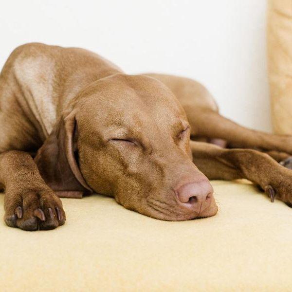 Urteil: Vermieter darf Tierhaltung nicht generell verbieten (Foto)
