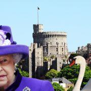 Blutige Attacke auf Windsor Castle! Mindestens 2 tote Tiere (Foto)