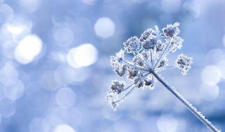 Bis Mitte der Woche beschert Kaltluft aus Nordosten deutschlandweit Dauerfrost. (Foto)