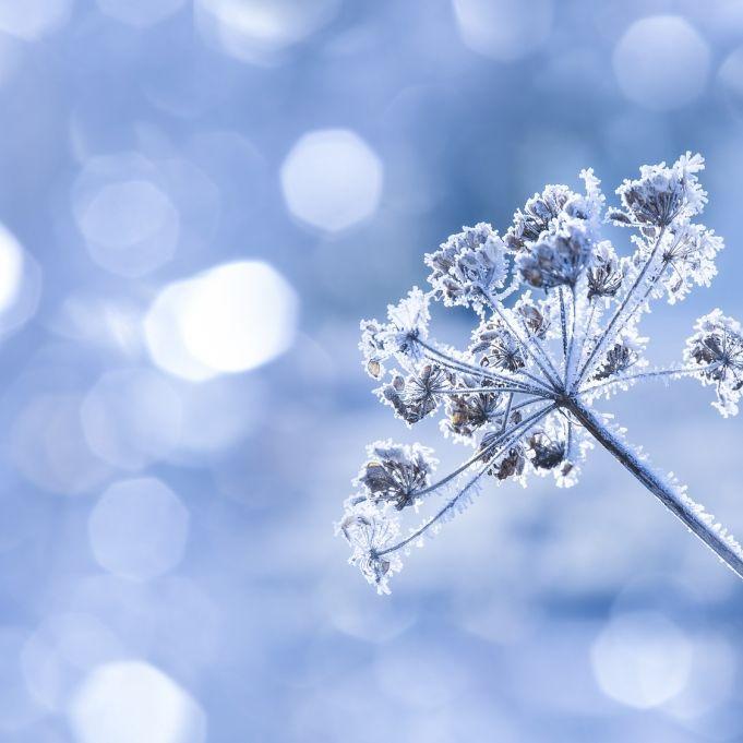 Knackig kalt! Jetzt kommt der Frost doch zurück (Foto)