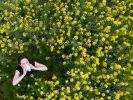 Viele Menschen reagieren allergisch auf Pollen. (Foto)