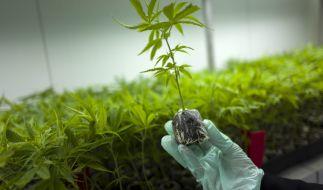 Schwerkranke erhalten Drogen bald auf Rezept. (Foto)