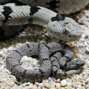 Schlange im Klo gefunden! Doch DAS ist noch nicht alles (Foto)