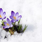 Der Frühling kommt! Endlich wird es wärmer (Foto)