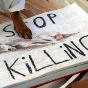 Müssen die Hunde wegen dem ESC getötet werden? (Foto)