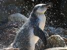 Dreister Diebstahl: Unbekannte haben einen Pinguin aus einem Gehege in Mannheim gestohlen. (Foto)