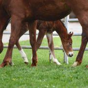 Perverser schändet 7 Pferde sexuell - 5 Tiere sterben (Foto)