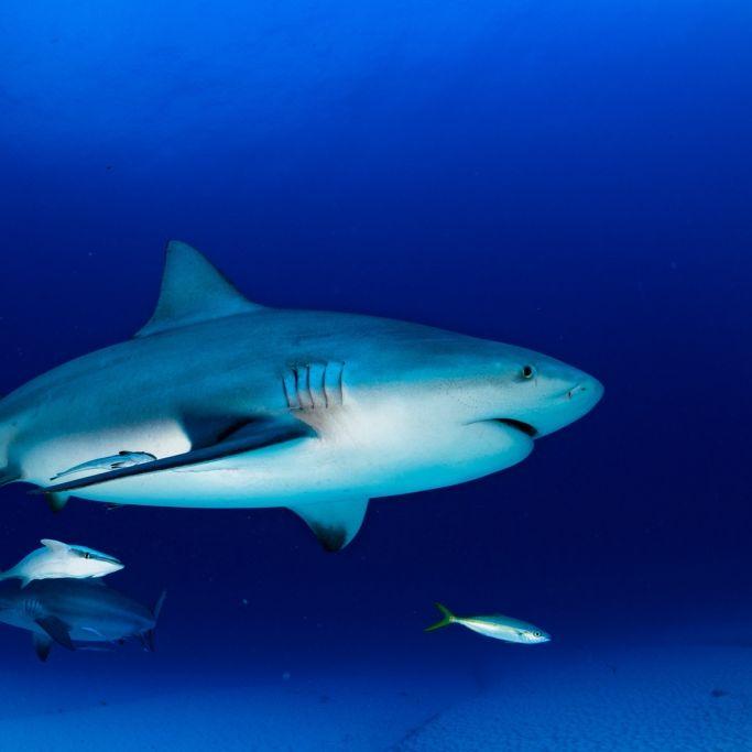 Halb-zerfressener Hai angespült (Foto)