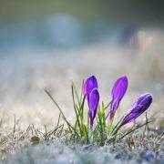 Wird das Wetter im März frühlingshaft? (Foto)
