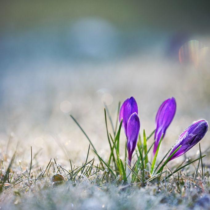 Warmer Frühling? Das sagt der 100-jährige Kalender (Foto)