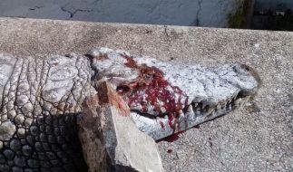 In Tunis haben Besucher ein Krokodil brutal hingerichtet. (Foto)