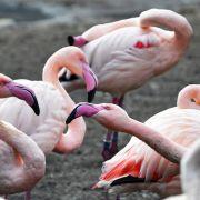 Kleine Kinder steinigen Flamingos in Zoo (Foto)