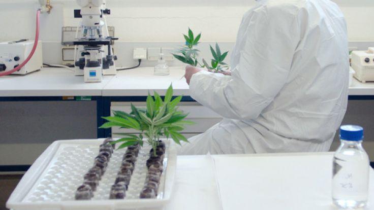 Können Krankenkassen die Kosten für die Cannabis-Therapie dauerhaft bezahlen.