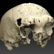 400.000 Jahre alter Menschenschädel entdeckt (Foto)