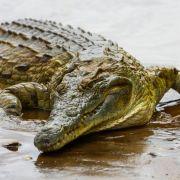 Kinderleiche in Krokodil gefunden - Was ist passiert? (Foto)