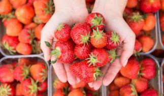 Wie gesund sind Erdbeeren wirklich? (Foto)
