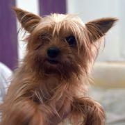Bei 60 Grad! Hund in Trockner zu Tode gequält (Foto)