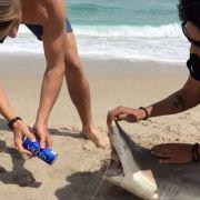 Tierquälerei? Bierdose mit Haifisch-Zähnen geöffnet (Foto)