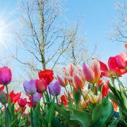 Hitze in Sicht! Frühling aktuell mit bis zu 22 Grad (Foto)