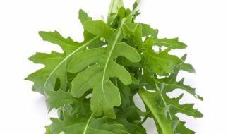 Stiftung Warentest hat 28 Salate untersucht. (Foto)