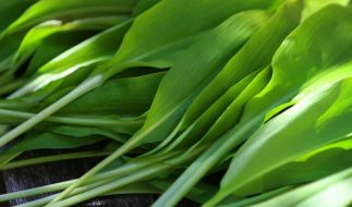 Bärlauch verliert beim Trocknen oder Einfrieren schnell sein Aroma. Besser ist es, aus ihm ein Pesto oder Würzöl zu machen. (Foto)