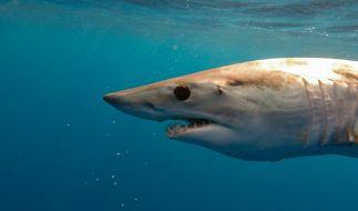 In Australien verirrte sich ein Hai in einen Swimmingpool. (Foto)