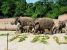 Tierquälerei im Zoo