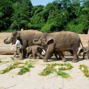 Mit Video: Baby-Elefanten grausam misshandelt (Foto)