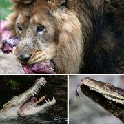 Mahlzeit! Diese Tiere fressen Menschen (Foto)