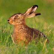Wetter-Lotto an Ostern! So ungemütlich wird die Eiersuche (Foto)