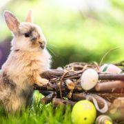 So wird Ostern weltweit gefeiert (Foto)