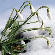 Kältewelle im Anmarsch! Nach Ostern wird es eisig (Foto)