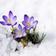 Schneeaktuell in Sicht? Jetzt wird es noch einmal frostig! (Foto)