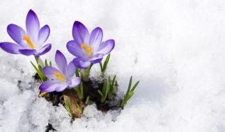 Nach dem Frühlingseinbruch wird es im April noch einmal winterlich. (Foto)