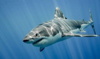 In Australien musste eine Familie dabei zusehen, wie ihre Tochter von einem Hai getötet wird. (Foto)