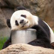 Das Mittagstief kann richtig böse sein. (Foto)