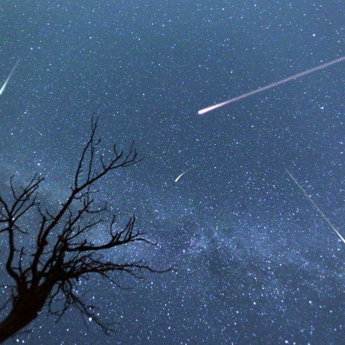 Zauberhafte Lyriden: So beobachten Sie das Spektakel am Himmel (Foto)