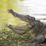 Großwildjäger von Krokodilen gefressen (Foto)