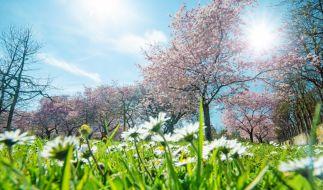 Kommen Sonnenanbeter im Mai voll auf ihre Kosten? (Foto)