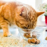 Katzenfutter im Test! Teure Marken fallen durch (Foto)