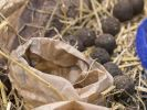 Die kleinen Samenbomben umgibt eine Mischung aus Ton- und Blumenerde. (Foto)
