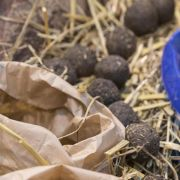 So können Guerilla- und Hobbygärtner Seedbombs herstellen (Foto)