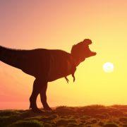 Tierschützerin im Dino-Kostüm verletzt Mann (Foto)