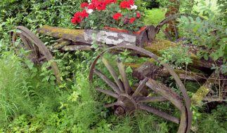Der Frühsommer hält Einzug in die Gärten. (Foto)