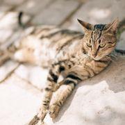 200 Katzen innerhalb eines Monats - Katzenmörder terrorisiert Dorf (Foto)