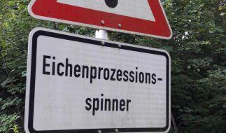 Vielerorts warnen die Behörden Spaziergänger und Radfahrer vor den gesundheitsgefährdenden Nestern der Eichenprozessionsspinner. (Foto)