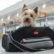 Tipps und Tricks, wie Sie sicher mit Ihrem Haustier reisen (Foto)