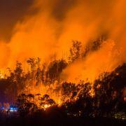 Hohe Waldbrandgefahr! Kann die Katastrophe auch Deutschland treffen? (Foto)