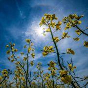 Diese Gefahr birgt die Sommersonnenwende für Tiere (Foto)